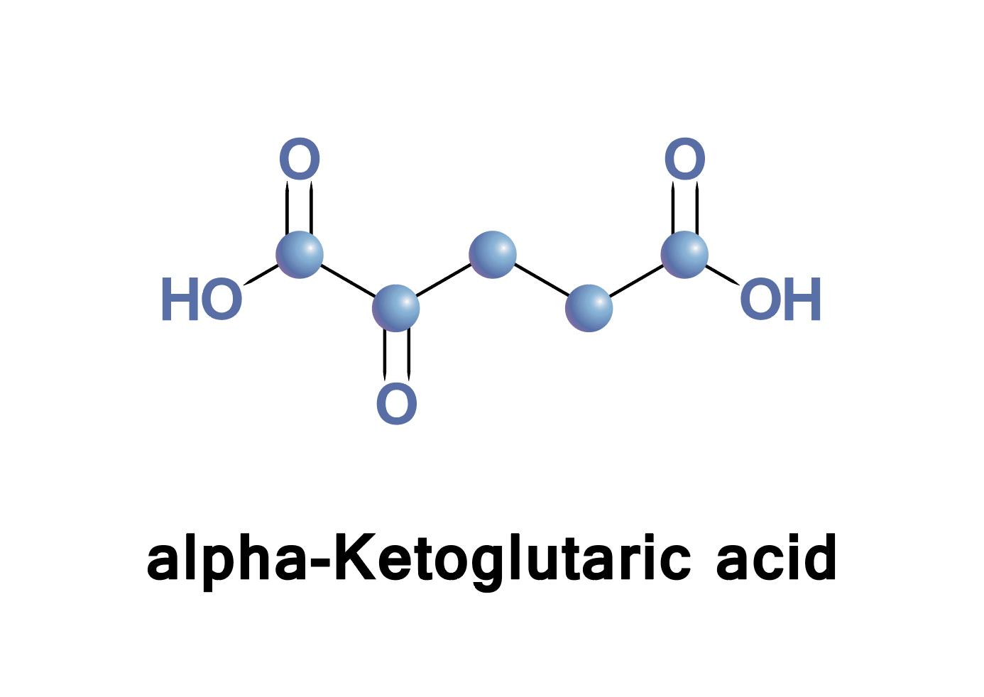 Alpha Ketoglutaric acid molecule diagram