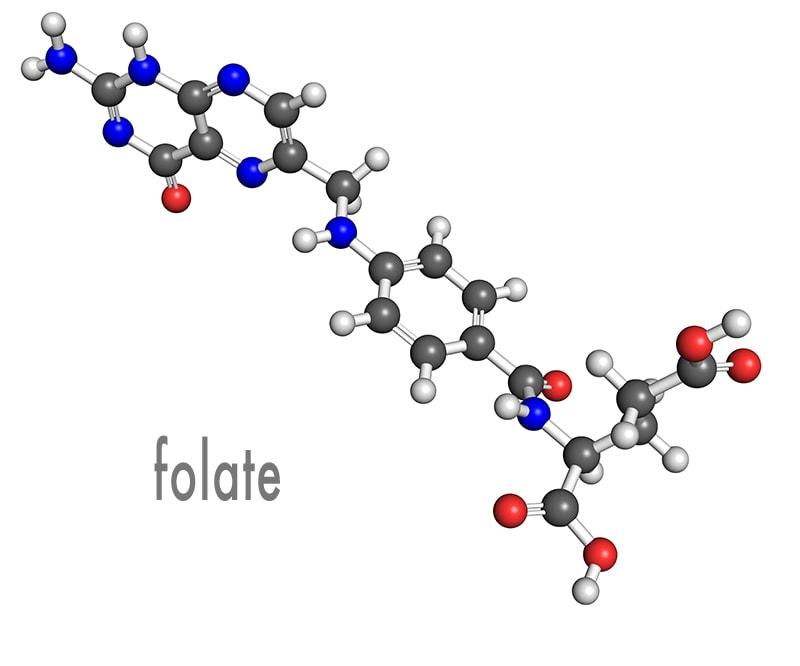 folate molecule